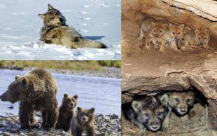 destaque_animais_ameacados