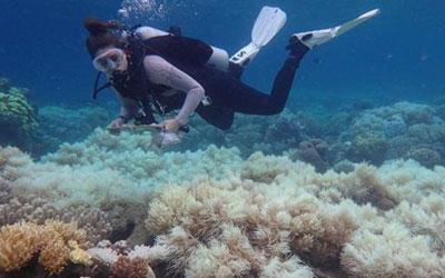 Branqueamento de corais ocorre por aumento de temperatura do oceano e é intensificado pelo aquecimento global. (Foto: ARC Centre of Excellence for Coral Reef Studies)