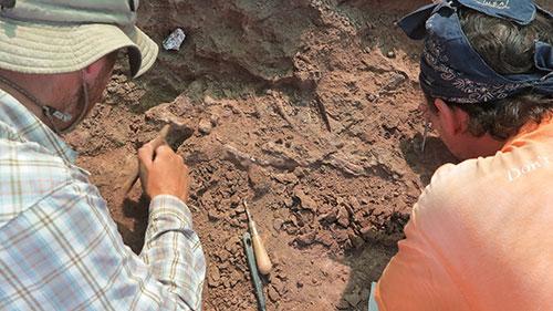 Pesquisadores trabalham na análise dos fósseis encontrados na Tanzânia (Foto: Roger Smith)