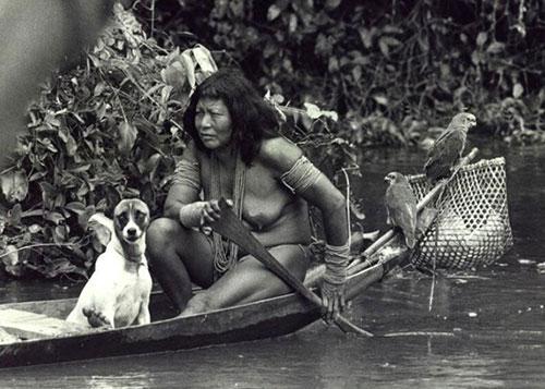 Índia Apalai navega pelo rio Paru no Amapá com seu cão