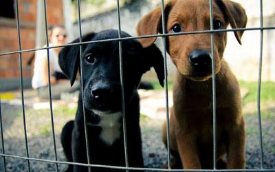 Lei determina semana de atividades para estimular adoção de animais resgatados
