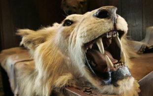Populações de animais são afetadas pela ação humana, como a caça - Kathy Willens / AP  Leia mais: https://oglobo.globo.com/sociedade/sustentabilidade/a-sexta-extincao-em-massa-esta-em-curso-os-humanos-sao-causa-21577043#ixzz4mYf62vJV  stest