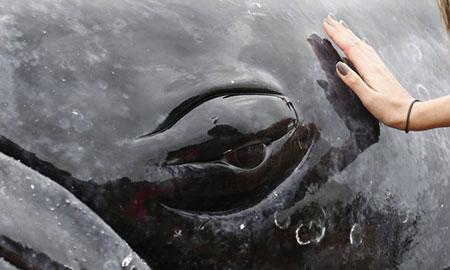 O filhote de baleia jubarte encalhou em BúziosFoto: Pablo Jacob / Agência O Globo