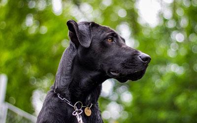Cães são considerados intermediários do parasita para humanos, e recomendação do Ministério da Saúde é eutanásia (Foto: Monnieblazkova/Pixabay/CC0 Creative Commons)